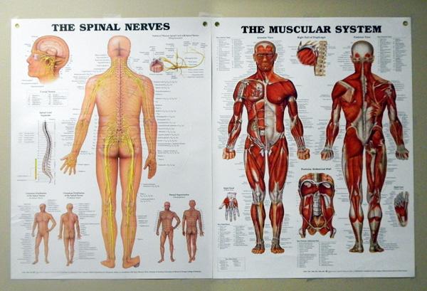 MuscuSkelitalPoster